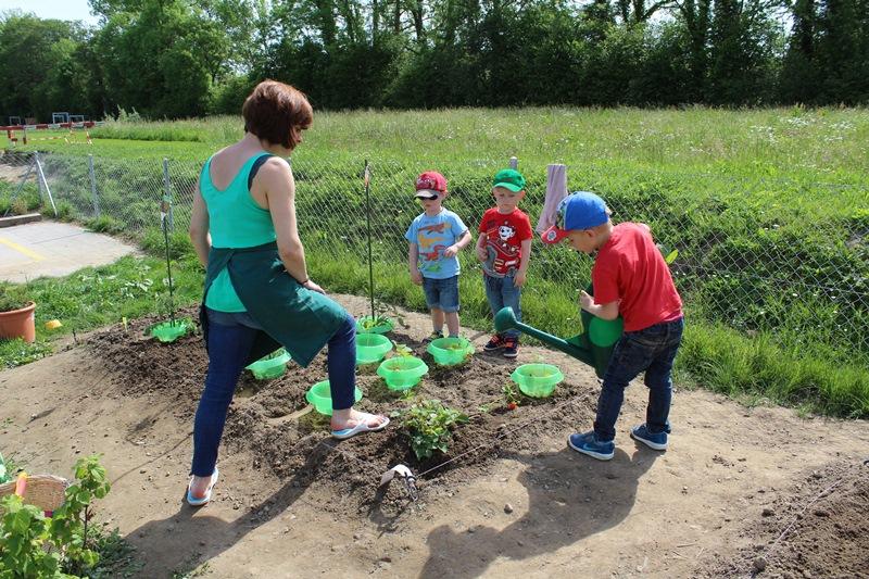 ACVER photo jardin potager